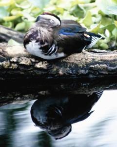 Bird 126