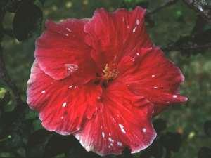 Flowers 2144