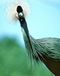 Bird 117